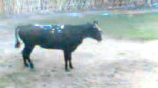 preview picture of video 'cenotillo 2010 #2#'
