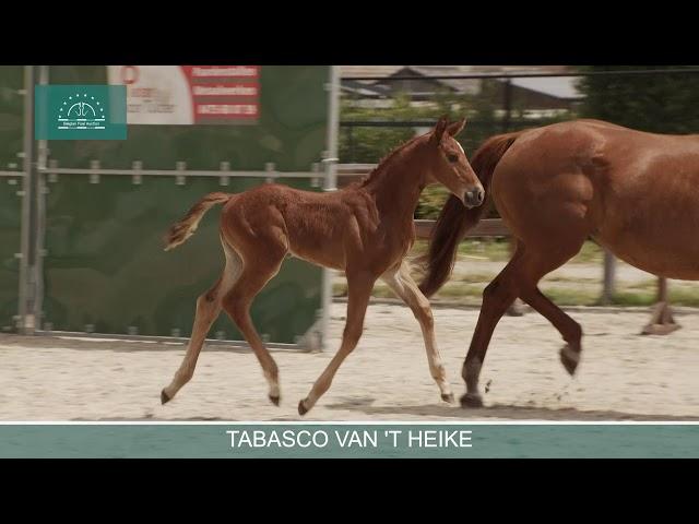 Tabasco van 't Heike