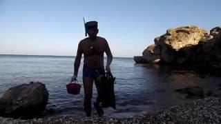 Где и как ловить мидии в море