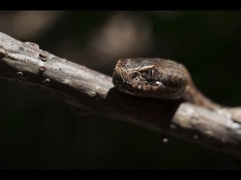Самые ядовитые животные России.  Пауки змеи скорпионы жуки