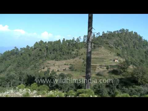 Ranikhet video