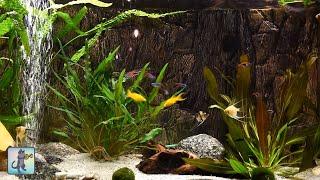 Relaxing Aquarium Fish Tank Sounds ~ NO MUSIC 🐟