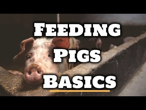 , title : 'How to Feed Pigs - For Beginners