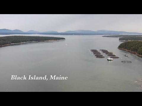 Raising sustainable, healthy, local seafood in the Gulf of Maine