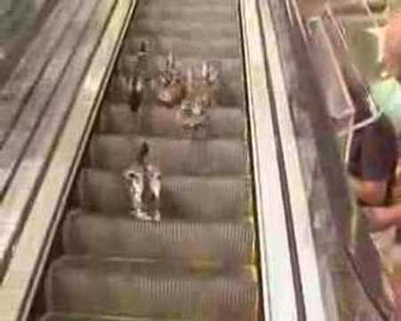 Here Are Some Cute Ducks Trying To Use An Escalator