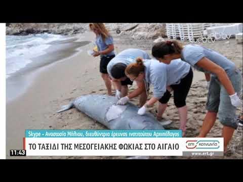 Το ταξίδι της Μεσογειακής φώκιας στο Αιγαίο   20/05/2020   ΕΡΤ