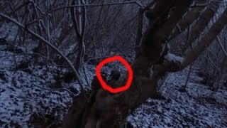 СТРАННОЕ СУЩЕСТВО ПРЯЧЕТСЯ В ДЕРЕВЕ неизвестное существо снятое на камеру в лесу