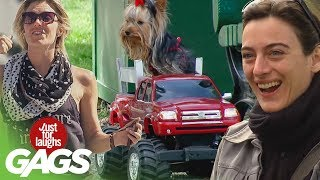 bromas Farsa con animales