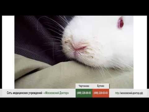 Проявление аллергии на кроликов