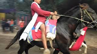 sonpur mela horse race - Kênh video giải trí dành cho thiếu
