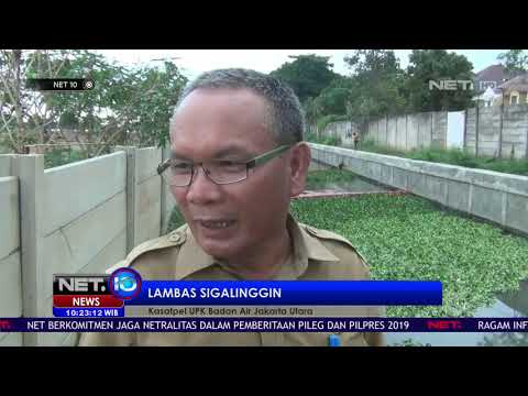 mp4 Naturalisasi Tanaman, download Naturalisasi Tanaman video klip Naturalisasi Tanaman