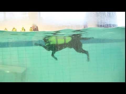 Flytväst  Aqua traxx®
