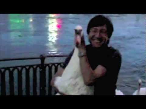 Hugging a Swan