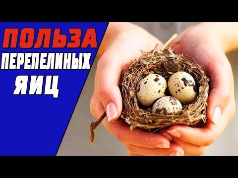 Если Кушать Перепелиные Яйца Каждый День, То Навсегда Избавишься От....