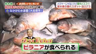 お願い!ランキング×栃木県「メジャーじゃないけど意外とスゴイ!栃木県の隠れスポットランキング」