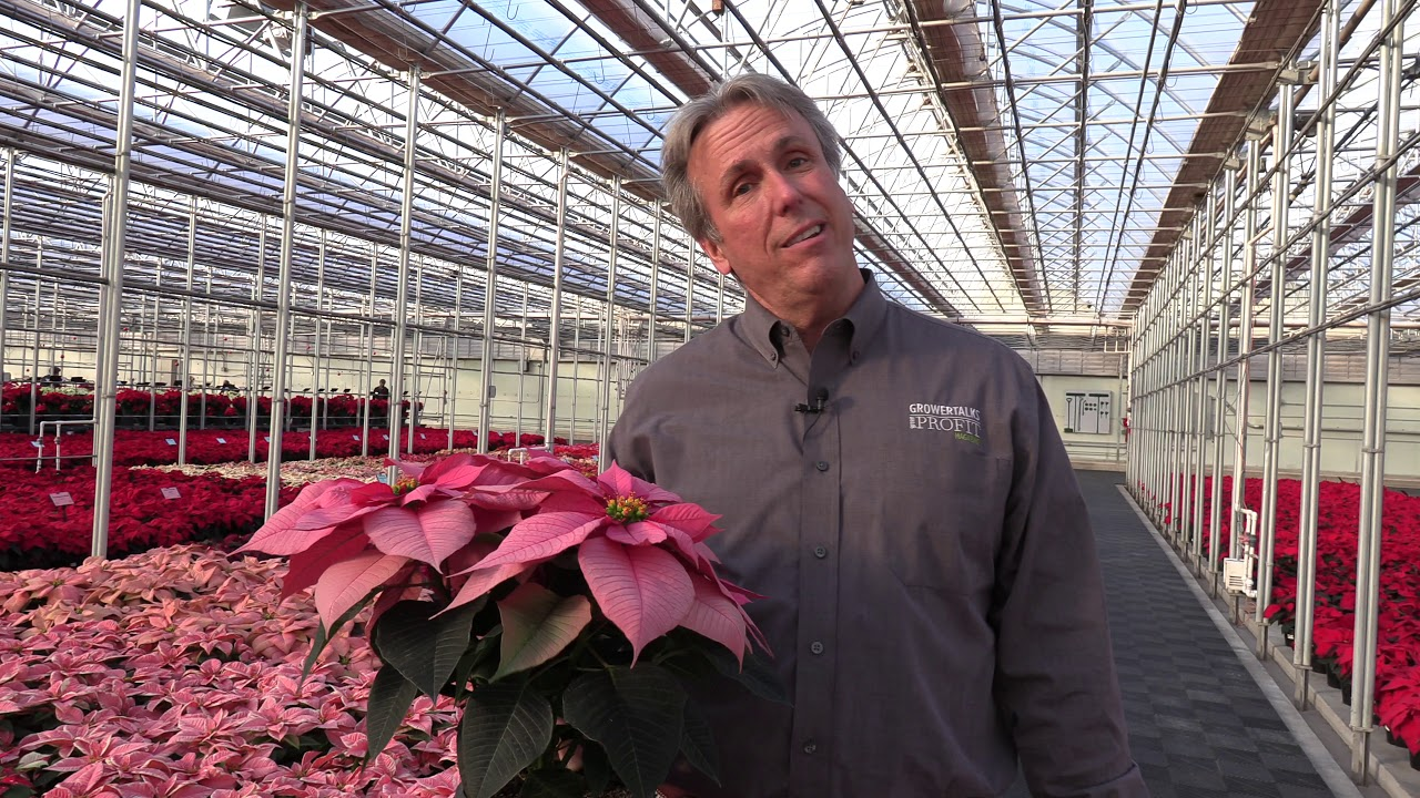 New Poinsettias at the NG Heimos 2020 Poinsettia Trial