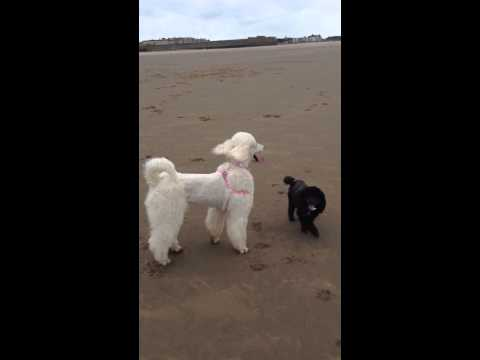 Playing with dogs at weston super mare beach