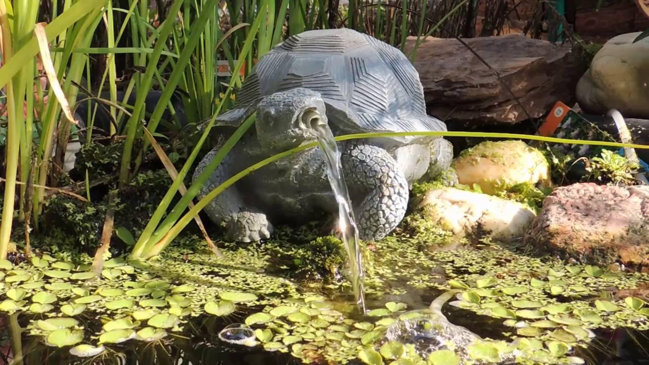 Wasserspeier im Teich – 20 Bilder mit Figuren