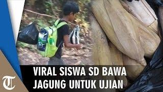 Viral Siswa SD Bawa Jagung untuk Bekal Ujian, Jalan Kaki 3 Jam hingga Menumpang Tidur di Rumah Warga