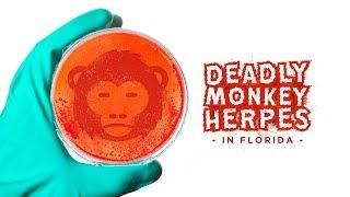 Andrew Heaton: Deadly Monkey Herpes Running Amok Florida