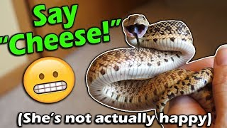 How to Read your Snake's Body Language