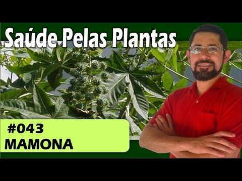 Use A Planta Mamona Para Melhorar Sua Saúde