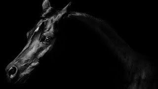 How To Paint A Horse Easy The Black Stallion In 2 Colors 🐴 | TheArtSherpa