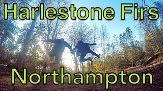 Harlestone Firs Northampton - A walk with the Hubbard's
