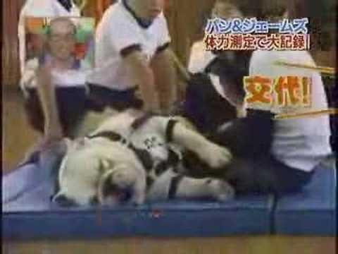 動物也會模仿人類做運動