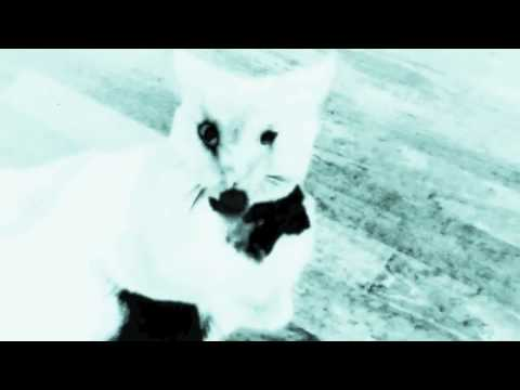 The Reptilians - To Break Is Divine - OFFICIAL VIDEO online metal music video by THE REPTILIANS