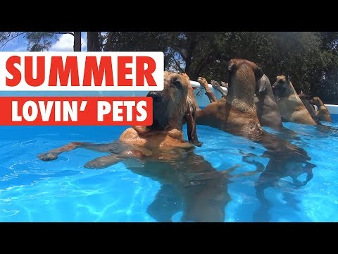 Watch These Pets Enjoy the Summer Months