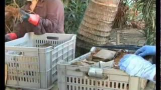 Una solución a la contaminación: Micorremediación  utilizando hongos para limpiar los derrames de petróleo