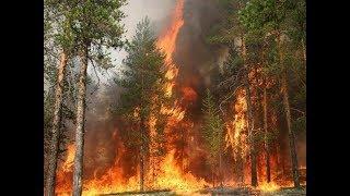 Пожар в сосновом бору г.Семей 2018г