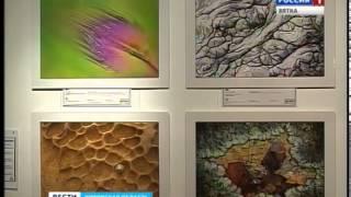 Выставка «Золотая черепаха» в Галерее Прогресса (ГТРК Вятка)