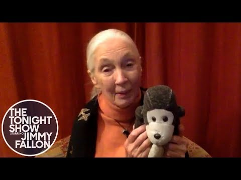 Vidéo de Jane Goodall