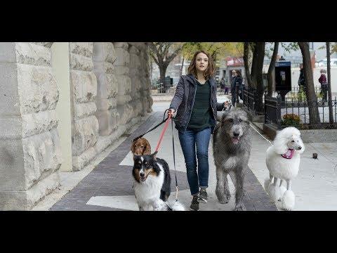 Egy kutya négy útja online
