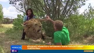 Как живет крупнейший в Европе крымский питомник львов