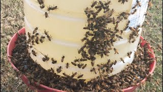 Feeding Honey Bees In The Fall And Winter
