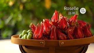 Autumn ruby | Sugared Roselle