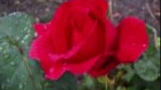 Paper Roses Anita Bryant