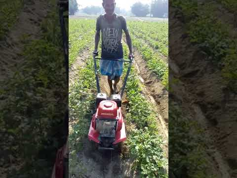 , title : 'Honda f300 power weeder hilling soil second time in potatoes with yellow ridger after 28days