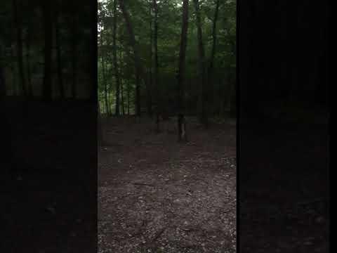 Campsite full of lightening bugs!