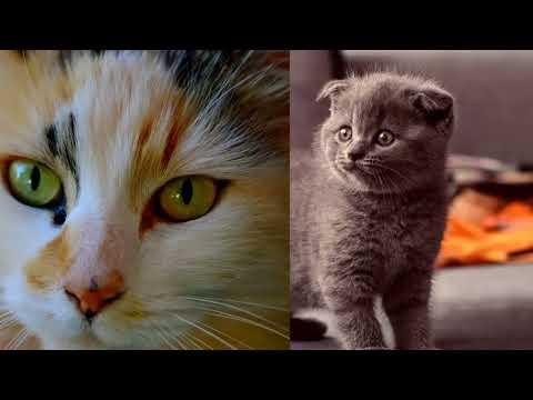 Поздравление. Всемирный день кошек.