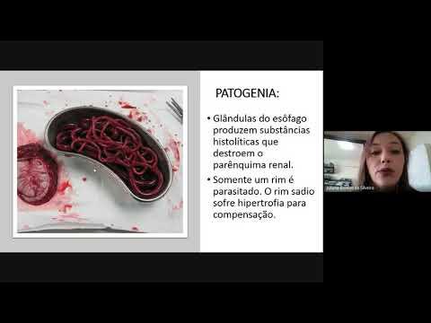 A protozoán paraziták fejlődési ciklusa