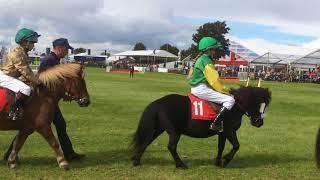 Shetland Pony Grand National Race Royal Berkshire Show 2017