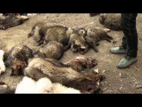 Pelz - Made in China - PETA