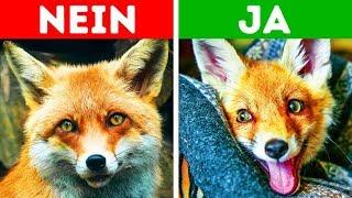 10 exotische Haustiere, die erlaubt sind