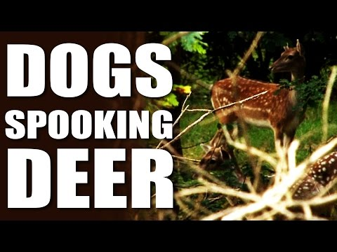 Deer Stalker vs Dog Walker