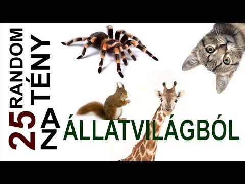Bolgár parazitakészítmény
