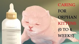 How to Take Care of Kittens   Caring for Orphan Kittens (0 to 4 Weeks)